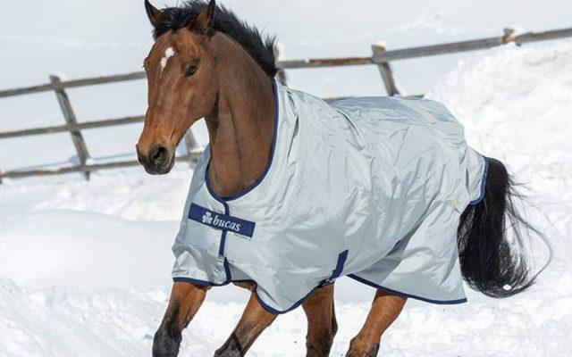 Horse Blankets Horse-Blanket-AW21