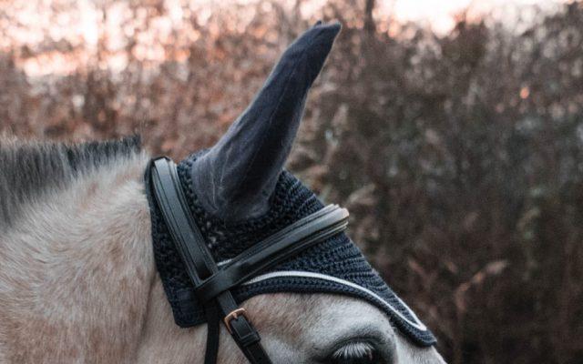 Horse Saddlery horse with saddlery