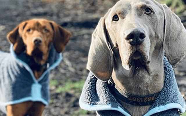 dog coats SS21