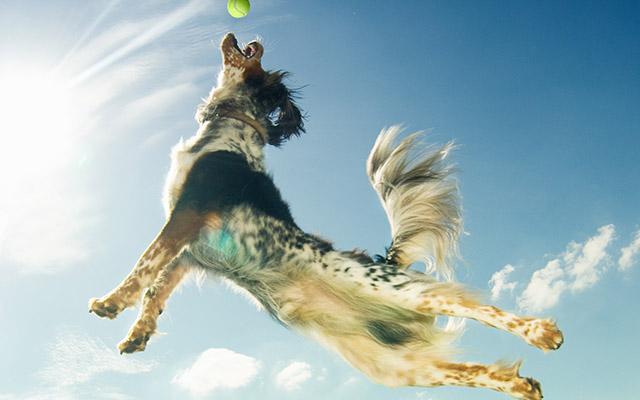 Dog training SS21