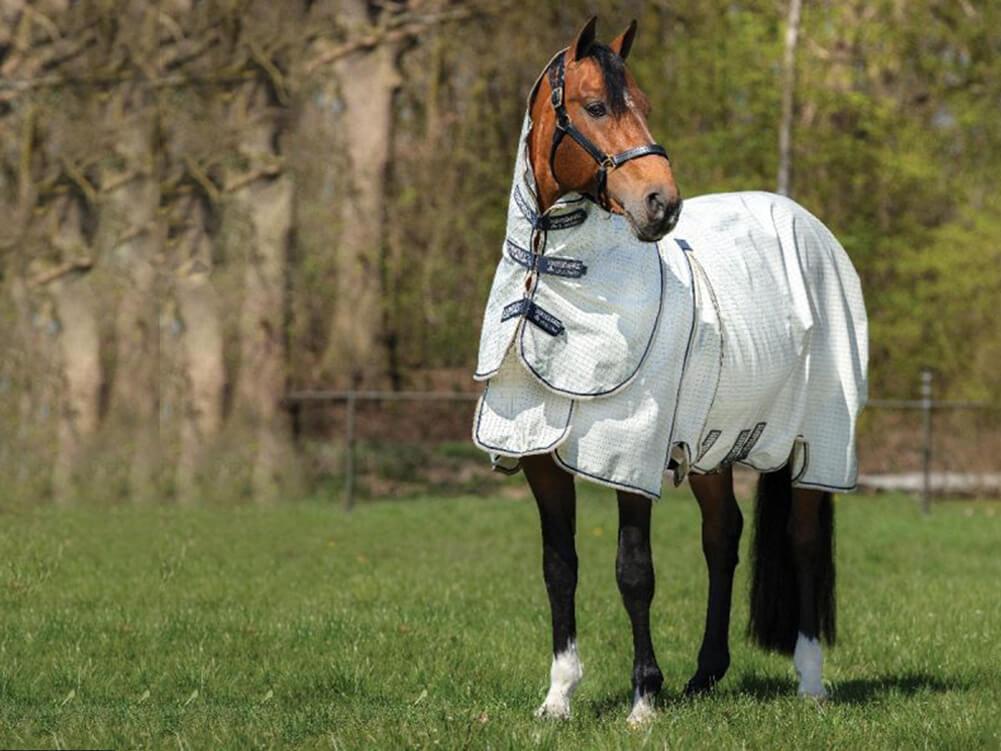 Horse Tack & Equipment