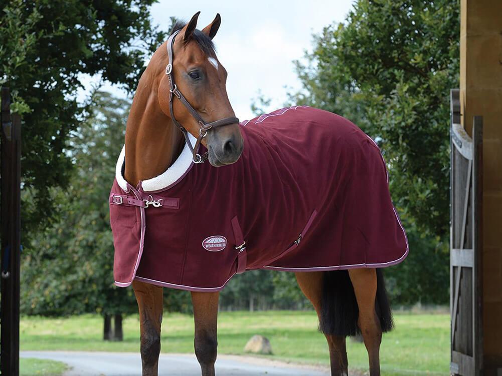 horse-lifestyle-AW21