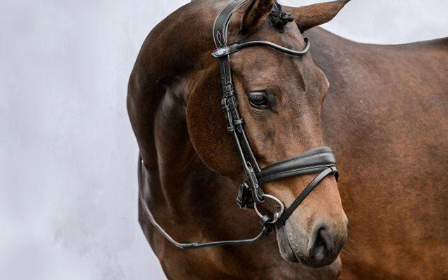 Horse Saddlery sadderly banner